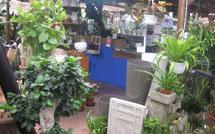 plantas para jardines en vigo