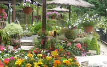 viveros crespo - flores y plantas de jardin en vigo